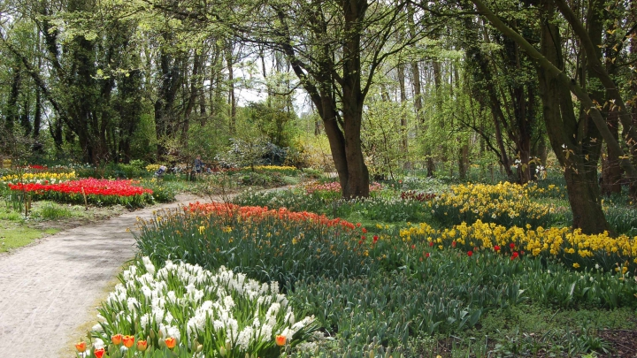 Home - Springfields Festival Gardens